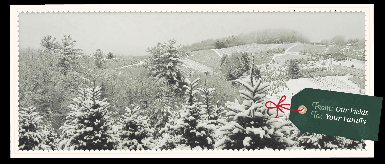 Christmas Tree Farm Asheville Nc.Home Mistletoe Meadows